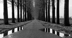 Tiendweg, Herwijnen (Hans Westerink) Tags: herwijnen gelderland nederland nl hanswesterink canon 6d panorama black white tree boom road weg netherlands