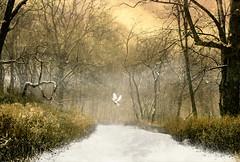 Counting on You (floralgal) Tags: ryenewyork newyorklandscape marshlandsconservancy snowydayinryenewyork winterinnewyork naturepreserve bird marshlands park woodlands westchestercountynewyork fox redfox snowtrails