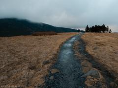 Roan High Knob (Prso999) Tags: roan high knob nature winter east tennessee mountains america park طبيعه امريكا hiking walkalone walk alone top