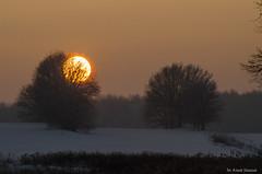 Krzew gorejący (jacek.staszczuk) Tags: styczeń january zima wint snow śnieg polska poland krajobraz landscape s175028 nikond7000 sunset