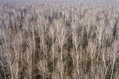 crowds (flyerkat_L.E.) Tags: tree birch nature film analog nikon fm2 fujisuperia400 35mm