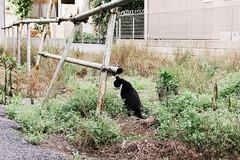 neko-neko1636 (kuro-gin) Tags: cat cats animal japan snap street straycat 猫 canon powershot pro1