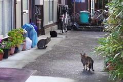 Today's Cat@2017-03-27 (masatsu) Tags: cat thebiggestgroupwithonlycats catspotting pentax mx1