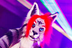 _MG_0680 (Tiger_Icecold) Tags: confuzzled cfz2016 cf2016 furcon furry convention fursuit birmingham party deaddog ddp deaddogparty