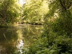 20150822-GR009751-Edit (fleetingphotons) Tags: river fishing ricohgr kennet wasingestate warrenbeat midghamberkshire