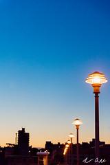 LEA_5044 (luke_amorelli) Tags: street field sunrise lights nikon dof row gradient d750 lamps lantern depth