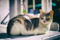 Cat (cnbybl) Tags: street cat turkey sony bozcaada sel35