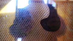 DMC-G2 - P1590212 - 2013-04-10 16-55-12 (archive_diary) Tags: schnbrunn vienna wien portrait selfportrait reflection zoo austria sterreich play framed web spiderweb tunnel bee frame worker chrysalis kran beehive spiegelung glas tiergarten rahmen netz puppe schmetterling biene spielplatz klettern spielen schildkrte palmenhaus fttern pfau arbeiter glasscheibe crysalis rutsche scheibe honigbiene glashaus bienenstock gerahmt fassadenkletterer bienenwabe baumwipfelweg ausderhandfressen 1042013 ifbachwouldhavekeptbees krysalis schaubienenstock