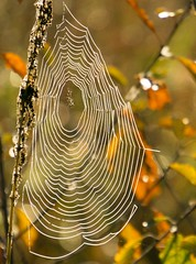 Web (say_cheesehead) Tags: morning spider volo dew bog