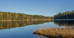 Bright as a mirror (Explore 2015-10-14) (nillamaria) Tags: autumn lake fog höst dimma sjö spegelblankt gloassy