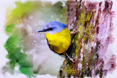 eastern yellow robin (Eopsaltria australis) (Rached MILADI - ) Tags: bird easter digitalwatercolor easternyellowrobin eopsaltriaaustralis aquarellenumrique rachedmiladiwatercolors rachedmiladidigitalpainting
