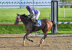"2015-11-11 (88) r7 Horacio Karamanos on #3 Golden Glint (JLeeFleenor) Tags: photos photography md marylandracing marylandhorseracing laurelpark jockey جُوكِي ""赛马骑师"" jinete ""競馬騎手"" dżokej jocheu คนขี่ม้าแข่ง jóquei žokej kilparatsastaja rennreiter fantino ""경마 기수"" жокей jokey người horses thoroughbreds equine equestrian cheval cavalo cavallo cavall caballo pferd paard perd hevonen hest hestur cal kon konj beygir capall ceffyl cuddy yarraman faras alogo soos kuda uma pfeerd koin حصان кон 马 häst άλογο סוס घोड़ा 馬 koń лошадь winner outside outdoors maryland"