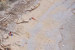 Hendaye, plage naturiste des deux jumeaux (thierry llansades) Tags: beach nature girl nude nu graf sable 64 nudist graff midi plage fkk euskadi bayonne biarritz pyrenees nue pyrnes bayona naturisme landes midipyrenees pyrenes anglet naturiste nive nudiste nudisti adour euscadi pyrenesatlantique naturi hendage