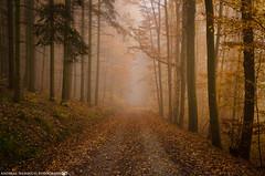 On a misty Day in November. (andreasheinrich) Tags: november autumn trees cold misty fog forest germany deutschland moody nebel path herbst kalt wald bäume weg badenwürttemberg düster neckarsulm neblig nikond7000