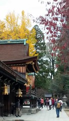 20151125_105555 (Freddy Pooh) Tags: kyoto japon kitanotenmangushrine