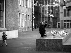 Inge Hoogendoorn (ingehoogendoorn) Tags: blackandwhite seagulls birds zwartwit gulls streetphotography denhaag feedingthebirds blacknwhite meeuwen straatfotografie hofplaats grondwetbank