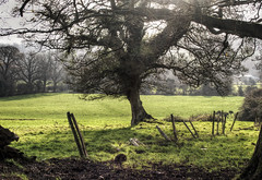 A fallen Fence, Hampshire (neilalderney123) Tags: tree fence landscape farm olympus hampshire winchester greass itchenabbas ruraloutdoor 2015neilhoward