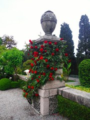 A drapery of roses (Lydie's) Tags: roses garden pedestal urn isolabella italy trees