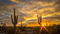 (Ken Mickel) Tags: arizona cacti cactus estrellla goodyeararizona hdr landscape landscapedesert outdoors plants saguaro sunsets topaz topazadjust nature photography silhouette silhouettes sunset