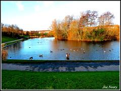 Kirkby scenes (exacta2a) Tags: liverpoolmerseyside kirkby knowsley lakes wildlife birds