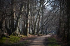 Forest Way (Dave Hilditch Photography) Tags: hertfordshire ashridge paths pathway trees forests nature landscape flora magicunicornverybest