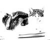 Cassie eyes closed monochrome (PDKImages) Tags: cat black ragdoll monochrome pet animal feline blackcat asleep eyes calming