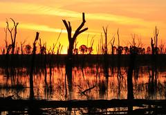 Tangerine (alideniese) Tags: wintonwetlands victoria australia landscape waterscape reflections trees swamp lake water silhouette shadows dusk sunset sun sundown evening sky clouds orange weather summer heat