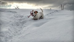 Anton (Oliver Kuehne) Tags: lgelectronicslgh850 lg jrt snow winter hiver penzing jackrussellterrier lgg5 bayern bavaria germany anton kong
