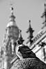 Composicion: pomba e catedral (carlosdeteis.foto) Tags: carlosdeteis galiza galicia