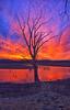 January Red Sky (Kansas Poetry (Patrick)) Tags: red sky redsky redsunset tree clintonlake kansas stullkansas patrickemerson