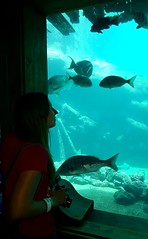 Aquarium_4-edit