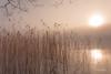 The Awakening (Fredrik Lindedal) Tags: mist fog landscape light lake reed ice tree sun sunlight sky skyline sweden nikon calmness harmony happy sunrise morninglight morning reflection fredriklindedalse serene
