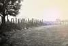 L'hiver (Alexandra Kfr) Tags: fields champs hiver winter tree arbre nature blackandwhite noiretblanc colours wire fence light lumière grass herbe sky ciel line ligne tache stain contrast nikon d3100 nikkor