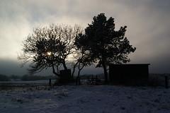 Against the sun (Steenjep) Tags: vinter winter jylland danmark denmark sne snow karup karupå fiskehytte hisf sol sun sky cloud storm front