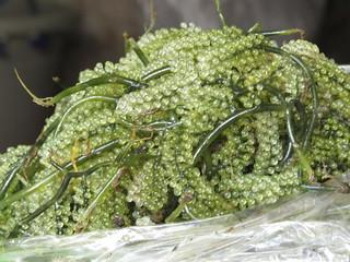 sea grapes (damong dagat)
