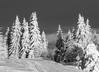 Winter (P. Burtu) Tags: blackwhite svartvitt snö snow träd tree dalarna orsa skiresort grönklitt skiing skidåkning vinter winter
