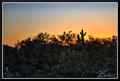 SaguaroSunset_7665d (bjarne.winkler) Tags: day8 photo foto safari sunset land of saguaro desert cactus plants biosphere 2 north tucson az