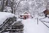 DSC06222 (Kashinkoji) Tags: sony a77 slt snow landscape temple kyoto japan sanzenin