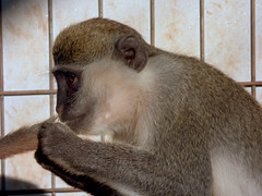 Paphos Zoo - monkey tail cleaning (3)