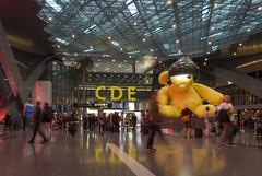 Lamp Bear displayed at HIA Feb-10-17 (Bader Otaby) Tags: doha hamad hia doh qatar lambear art
