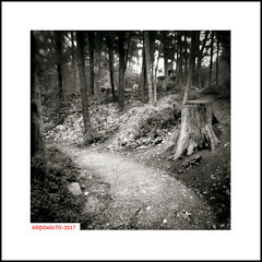 To the River run (DelioTO) Tags: 120 blackwhite curved d23 duotone f175 january landscape natparks ontario pinhole rain rural tmax100 trails woods