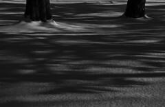(Carli Vögel) Tags: carlivögel winter witchy magic minimal blackandwhite shadows snow adirondacks
