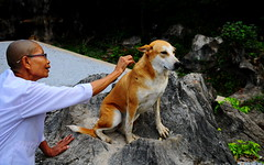 ,, Fixing Pumpkin ,, (Jon in Thailand) Tags: pumpkin dog k9 nun jungle boulder nikon d300 nikkor 175528 wound streetphotographyjunglestyle street streetphotography littledoglaughedstories
