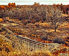 Oct 25 2015 - Fall along the BNSF railway in Big Horn County (La_Z_Photog) Tags: lazy photog elliott photography big horn river goose island railroad tracks fall colors sagebrush 102515gooseislandandcemetery