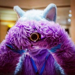 I will take a picture of YOU! :3 #photo #fursuiting #purple #furry #blue #wolf #fluffy (Keenora Fluffball) Tags: keenora fursuit furry kee