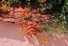 Blomster på tag (Benny Hünersen) Tags: flowers roof holiday tag blumen greece griechenland dach ferie sivota blomster syvota 2015 augsut grækenland