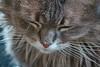 IMG_4717 (d_fust) Tags: cat kitten gato katze 猫 macska gatto fust kedi 貓 anak katt gatito kissa kätzchen gattino kucing 小貓 고양이 katje кот γάτα γατάκι แมว yavrusu 仔猫 का skorpi बिल्ली बच्चा