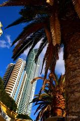 Surfer Paradise_Australia_2014 (EricaMassa15) Tags: city trees building architecture alberi skyscraper gold coast high paradise cityscape surfer australia palm palmtrees highrise grattacielo palma architettura palazzi surferparadise