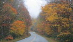 Fall Color (Jackie***) Tags: autumn fallleaves mountains rain fog fallcolors pumpkins autumnleaves blueridgeparkway blowingrock autumncolor boonenc fallmums