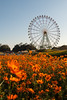 20151025-DS7_6753.jpg (d3_plus) Tags: park street sky plant flower nature japan nikon scenery angle hill wideangle jr daily flowerbed bloom 日本 amusementpark streetphoto 花 自然 空 dailyphoto 植物 ibaraki 公園 thesedays flowergarden 花園 景色 日常 路上 superwide 遊園地 茨城 丘 広角 a05 ストリート ニコン tamronspaf1735mmf284dildasphericalif kochia tamronspaf1735mmf284dildaspherical d700 超広角 nikond700 tamronspaf1735mmf284dild tamronspaf1735mmf284 路上写真
